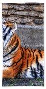 Siberian Tiger Nap Time Beach Towel