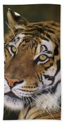 Siberian Tiger Portrait Endangered Species Wildlife Rescue Beach Towel