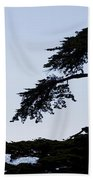 Silhouette Of Monterey Cypress Tree Beach Towel