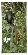 Silly Red-tailed Monkey Beach Towel