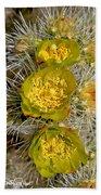 Silver Cholla Cactus Beach Towel