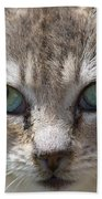 Silver Tabby But What Color Eyes Beach Towel