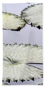 Silvery Sage Green Lily Pads Beach Towel