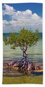 Single Mangrove Tree In The Gulf Beach Sheet