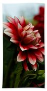 Single Red Dahlia Beach Towel