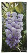 Single Wisteria  Beach Towel