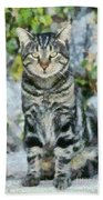 Sitting Cat Beach Towel