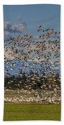 Skagit Snow Geese Liftoff Beach Towel