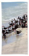 Skimmers On The Beach Beach Towel by Carol Groenen