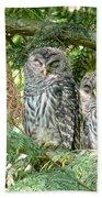 Sleeping Barred Owlets Beach Towel by Jennie Marie Schell
