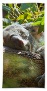 Sleeping Koala Beach Towel