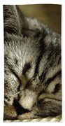 Sleeping Pet Beach Towel