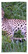 Sleepy Cheetah Beach Towel