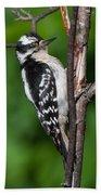 Sleepy Woodpecker Beach Towel