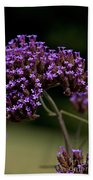Small Purple Flowers On A Verbena Plant Beach Towel