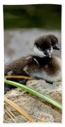 Smew Ducklings On Shore Beach Towel