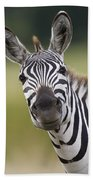Smiling Burchells Zebra Beach Towel
