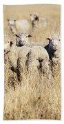 Smiling Sheep Beach Towel