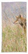 Smoky Mountains Coyote Beach Towel