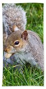 Snack Time For Squirrels Beach Towel