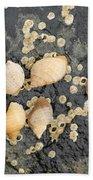 Snail Family Vacation Beach Towel