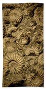 Snail Fossil Beach Towel