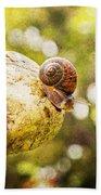 Snail Of A Time Beach Towel