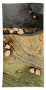Snails Converge Beach Towel