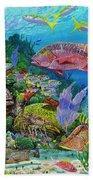 Snapper Reef Re0028 Beach Sheet