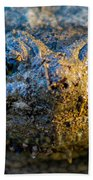 Snapping Turtle Beach Towel
