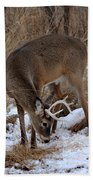 Sniffing Stag Beach Towel