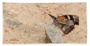 Snout Butterfly  Beach Towel