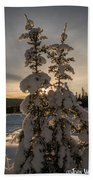 Snow Capped Sitka Spruce Beach Towel