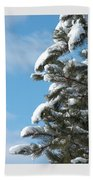 Snow-clad Pine Beach Towel