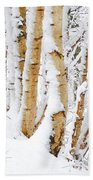 Snow Covered Birch Trees Beach Sheet by John Kelly