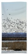 Snow Geese Taking Off At  Loess Bluffs National Wildlife Refuge Beach Towel