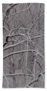 Snow In The Trees At Bulls Island Beach Towel