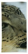 Snow Leopard 2 Beach Towel