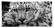 Snow Leopard In Black And White Beach Towel