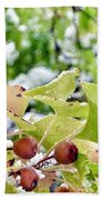 Snow On Green Leaves With Red Berries Beach Towel