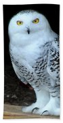 Snow Owl Beach Towel