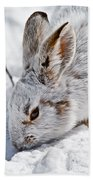 Snowshoe Hare Pictures 133 Beach Towel