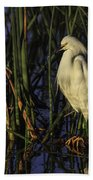 Snowy Egret In The Reeds Beach Towel