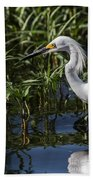 Snowy Egret Stalking Beach Towel