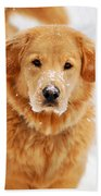 Snowy Golden Retriever Beach Towel by Christina Rollo
