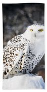 Snowy Owl Cold Stare Beach Towel