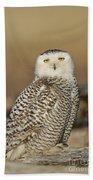 Snowy Owl Female Beach Towel