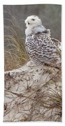 Snowy Owl In Florida 14 Beach Towel