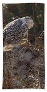 Snowy Owl In Florida 16 Beach Towel