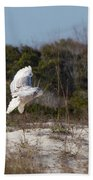 Snowy Owl In Florida 19 Beach Towel